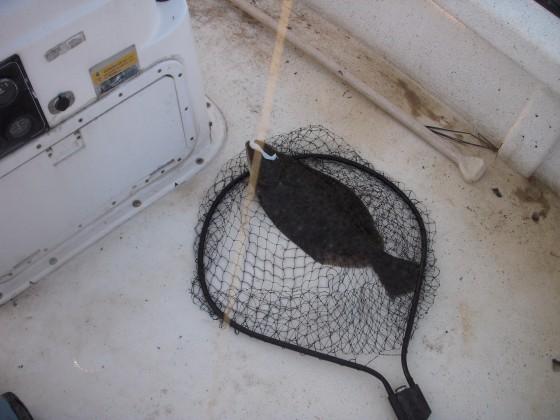 flounder 047