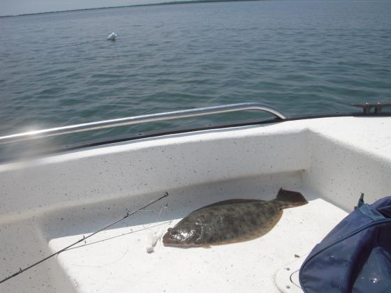 flounder 049