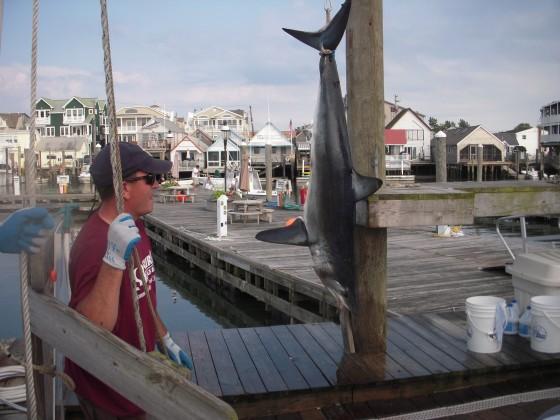 flounder 053
