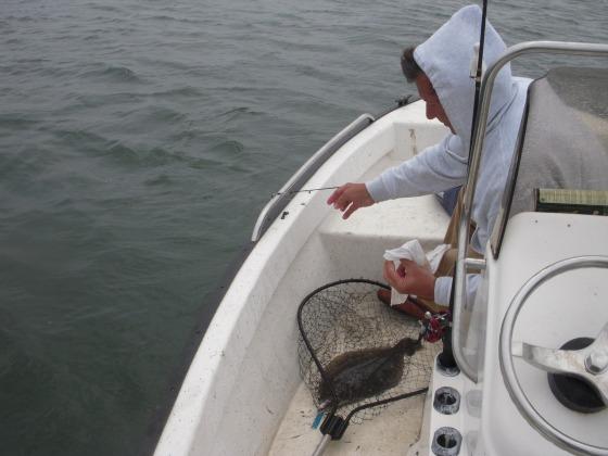 flounder 064