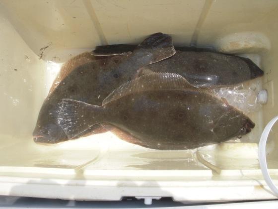 flounder 081