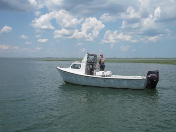 flounder 085
