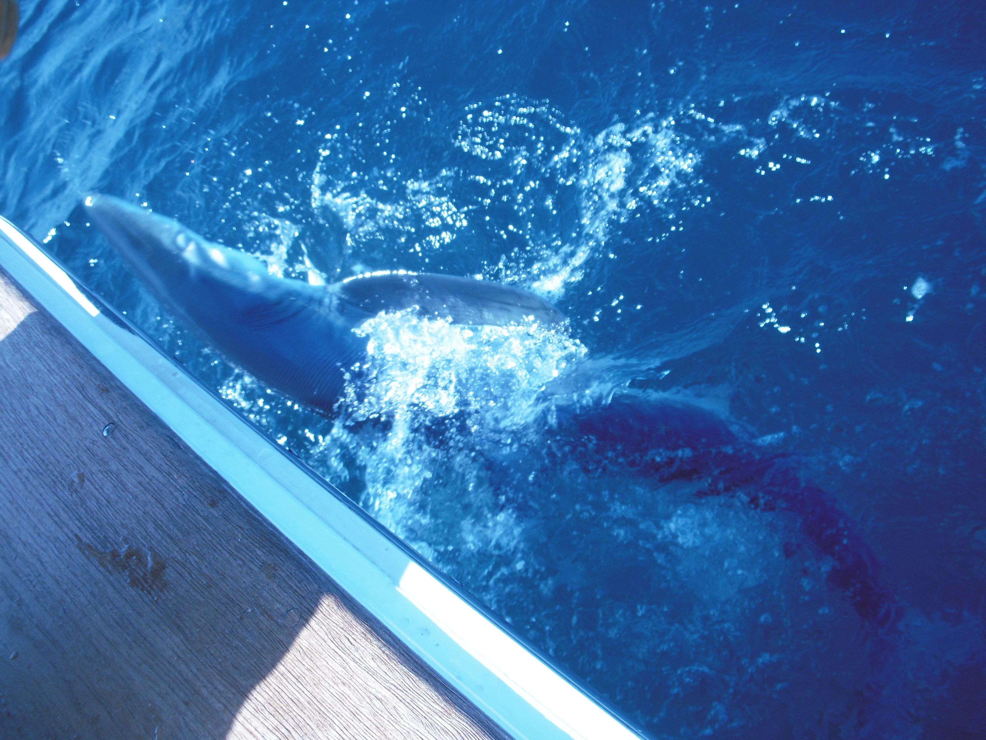 Kensdock report nj saltwater sportsmen s alliance ken 39 s for Nj saltwater fishing registry