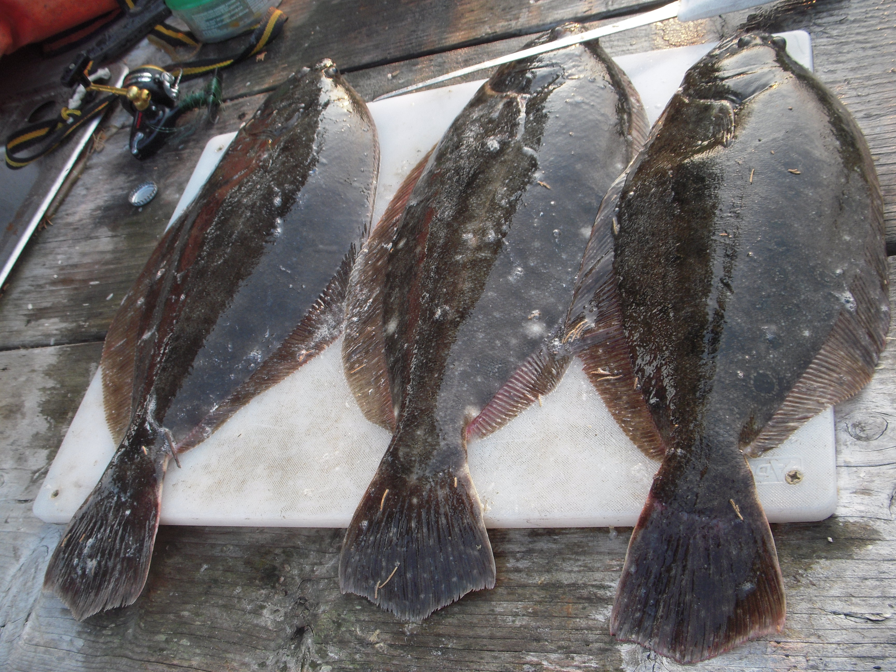 How to Fish for Flounder 11 Steps with Pictures  wikiHow