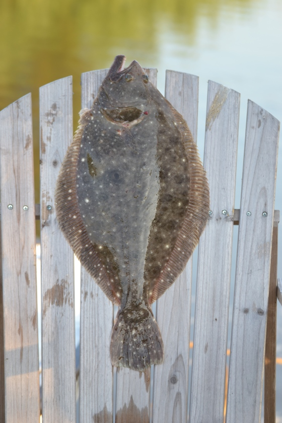 Summer flounder season 2014 is underway.