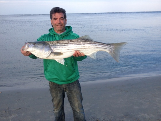 "This 37.5 "" striper put my weakfish gear to the test."