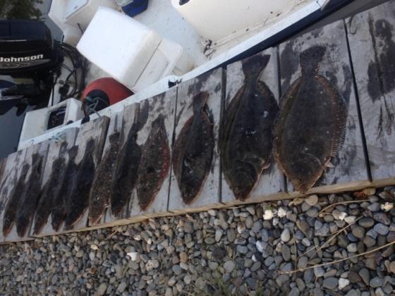 Sunday's back bay summer flounder catch