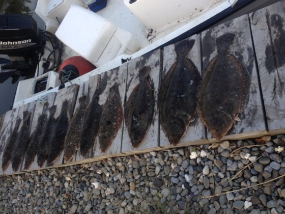 Sunday's back bay summer flounder catch