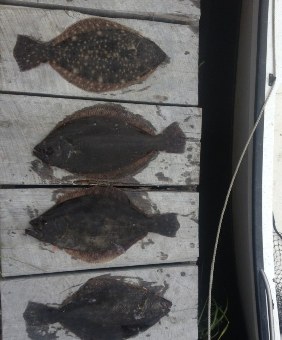 Today's flounder like all that I catch,  were caught in the sounds of Cape May co..