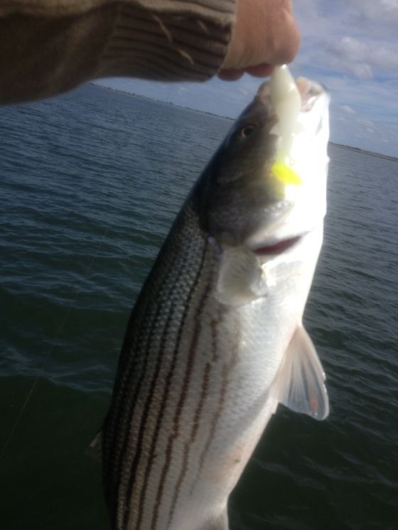 Afternoon striper 9-30-2014