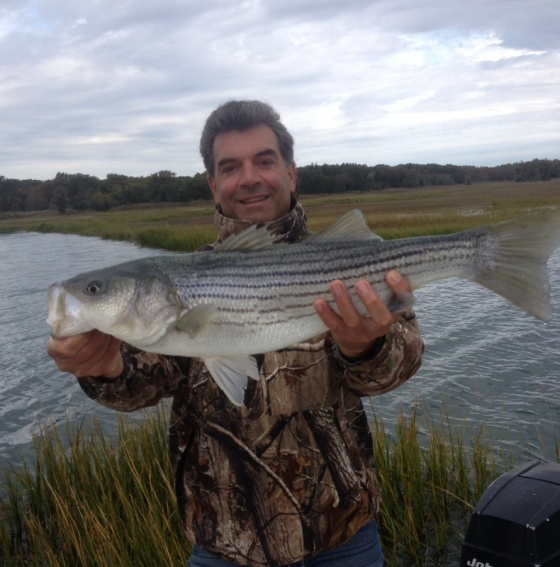 "Healthy 30"" back water striper"
