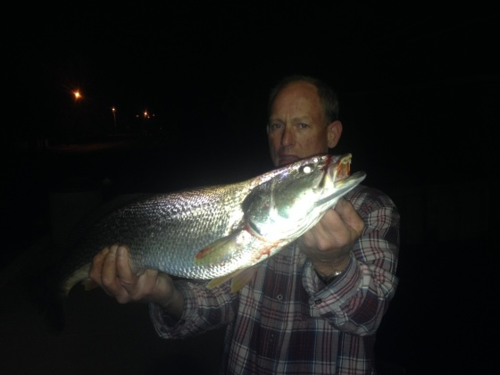 Ed Teise  and his first 2015 tide-runner weakfish