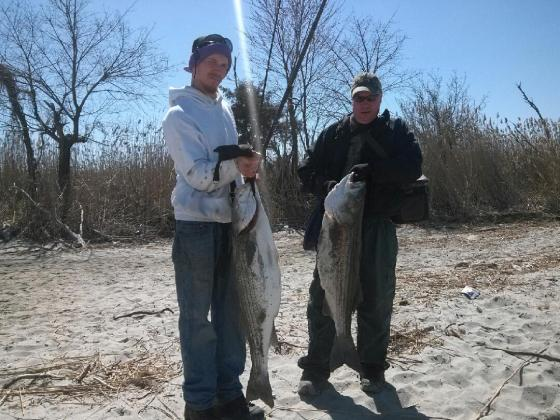 Couple of big Striper Bass  caught in the Delaware