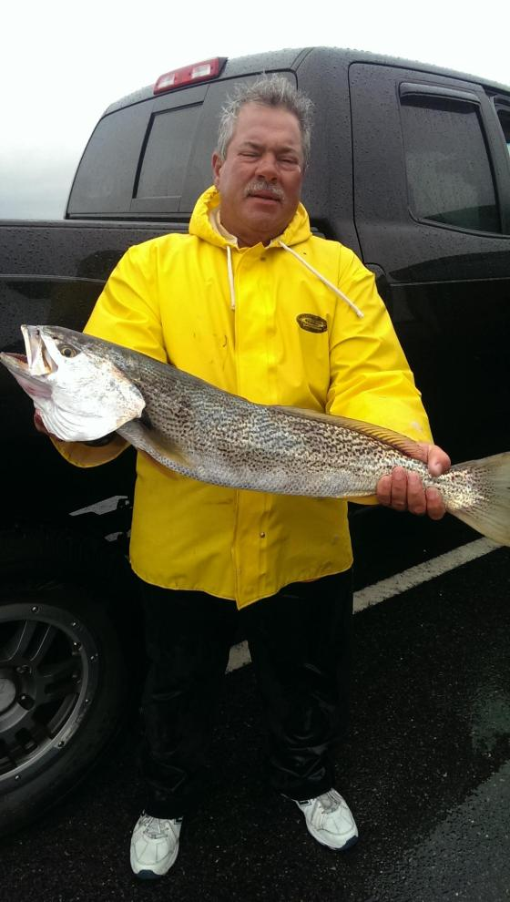 A Cape May County,NJ  spring tide-runner weakfish.  CJ fought the rain and the wind for today's  bite.