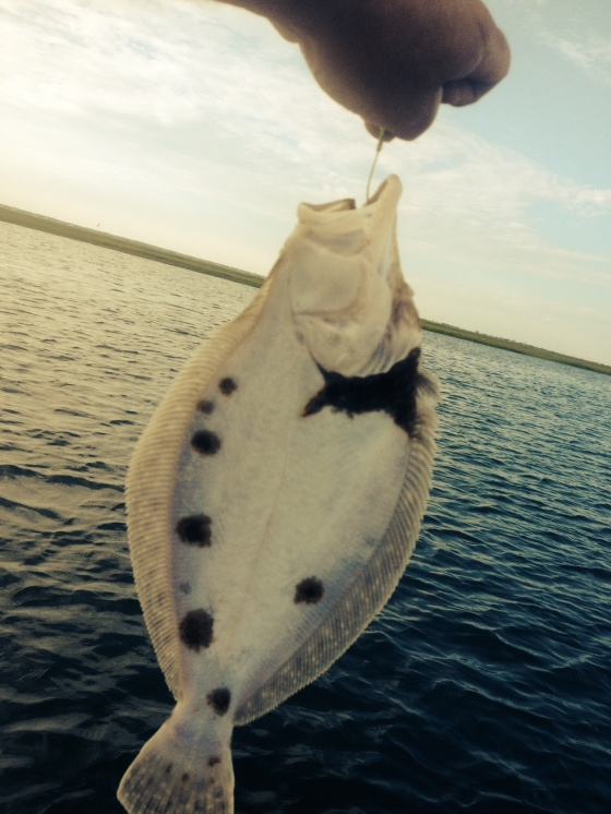 I also caught my  annual funny looking summer flounder .