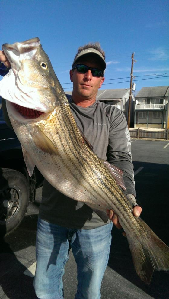 Mark shows a Striped Bass that   he caught from the heavy surf.  October 2015 Cape May County, NJ