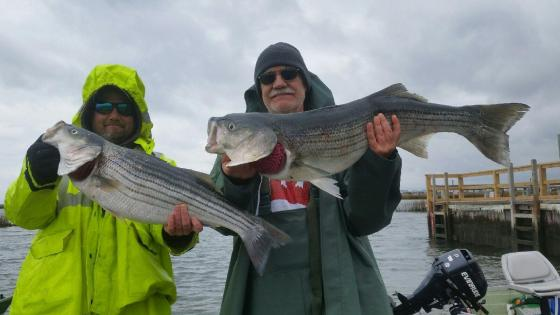Charle and Chip Gruff had no trouble finding these keeper striped bass today.