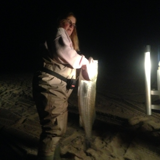 Linda Polhamus struggles to hold up her big striped bass. She caught this fish last night, from a top-secret beach spot. She released it .