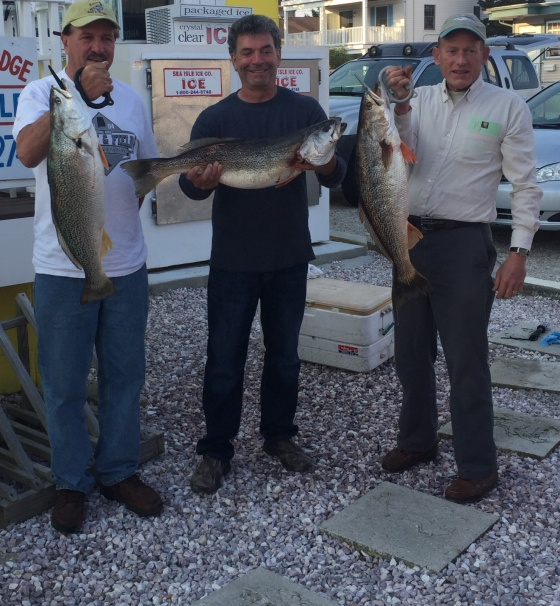 The 3 largest weakfish caught  on the east coast in 2016.  Bill Collins (10.66), Ken Mcdermott (11.70) and Ed Teise (10+).  Ed and bill, are also listed, as top 10 east coast Anglers. In the Fishermen Magazine's tournament.