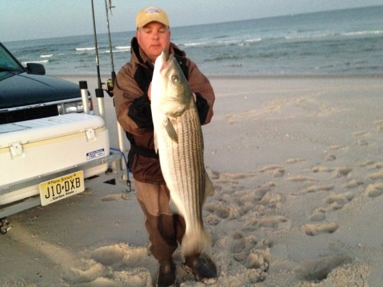 "Jeff Polhamus  shows a beautiful  44"" striper bass. He caught this one on a popper from the surf."
